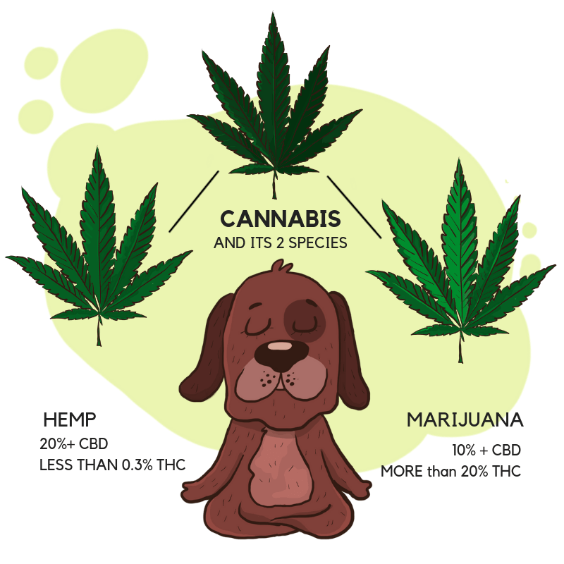 100% High-Quality CBD Oil For Dogs | Honest Paws