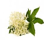 infusion-bio-fleur-sureau-defenses-immunitaires-ohmytea