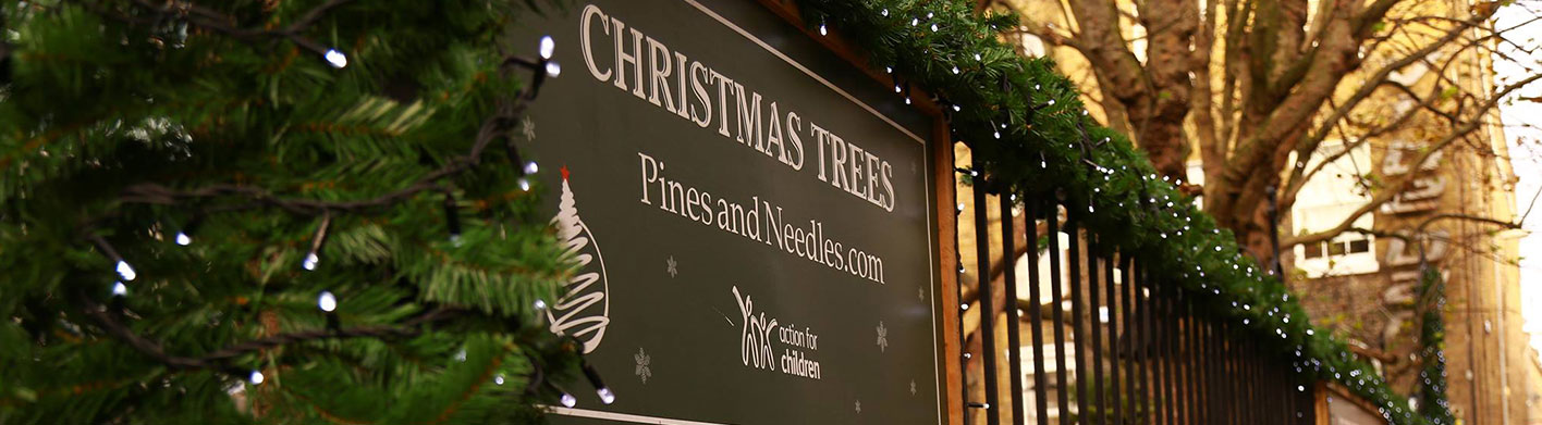 Discover The Online Christmas Tree Store Pines And Needles