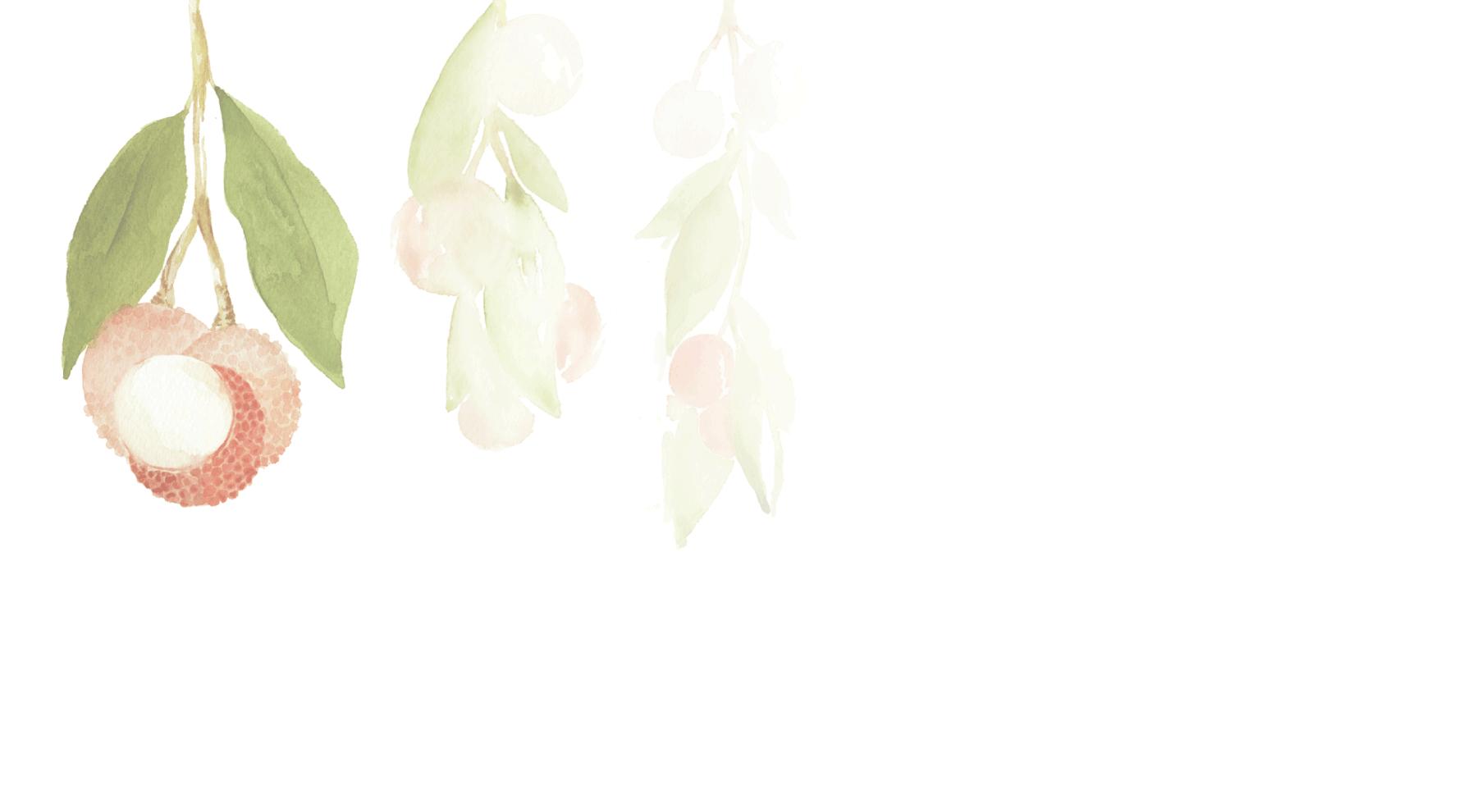 Organic Lychee