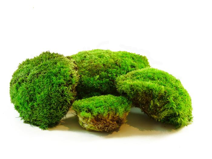 preserved bun pole moss