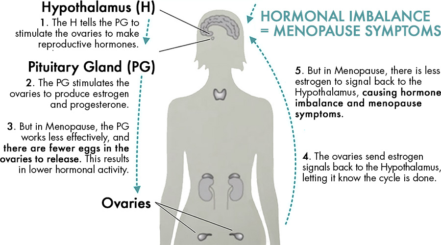 How menopause is caused by hormonal imbalance; involving the hypothalamus, pituitary gland, and ovaries.